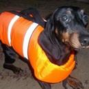 Спасательный жилет для средней собаки, размер М, вес до 12 кг.