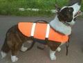 Спасжилеты для собак